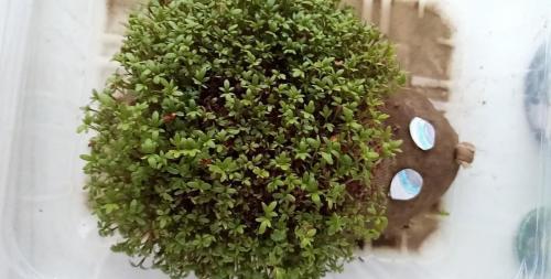 021 Eliška - ježko (Kutilov)
