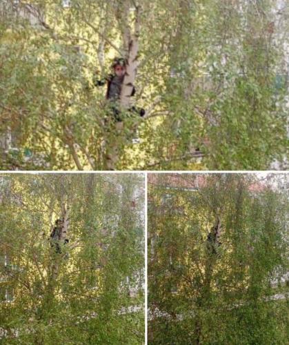 026 Viki - lezenie na strom (Pohybov)